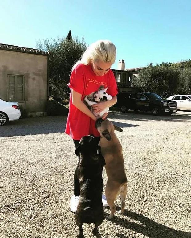 Ca sĩ Lady Gaga treo thưởng nửa triệu đô tìm 2 chú chó cưng - Ảnh 1.