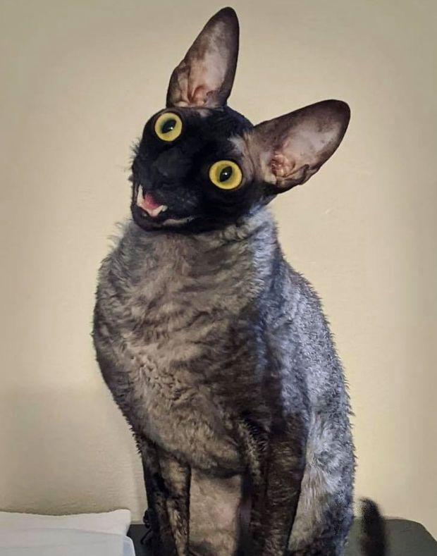 Khoe mèo cưng lên MXH, người phụ nữ nhận về loạt bình luận trái chiều vì vẻ ngoài độc nhất của con vật, sợ nhất là tin nhắn từ nhà trừ tà - Ảnh 5.