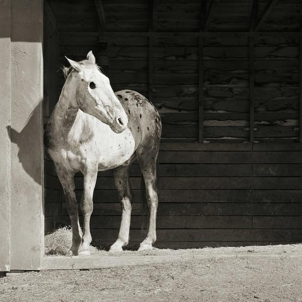 Chùm ảnh những con vật được cho phép sống đến già gây ám ảnh lạ kỳ: Khi các mảnh đời ngắn ngủi được ban tặng sự sống buồn tủi - Ảnh 1.