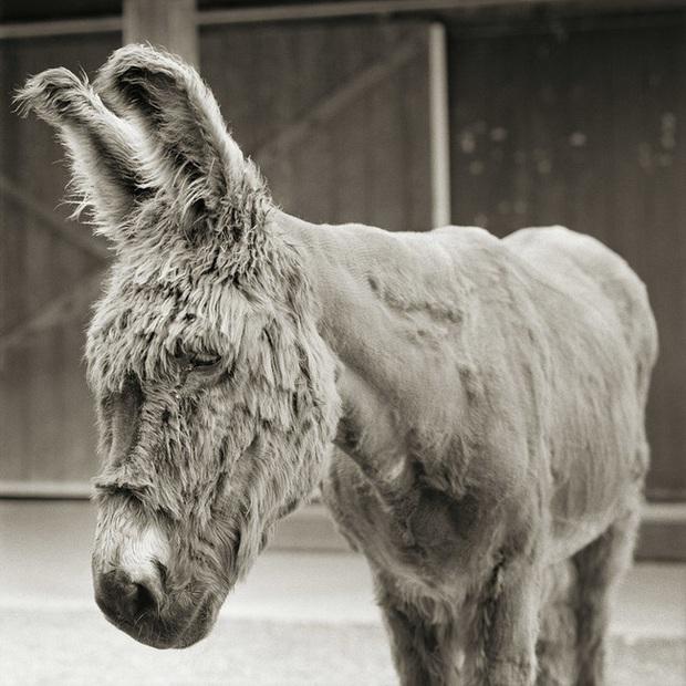 Chùm ảnh những con vật được cho phép sống đến già gây ám ảnh lạ kỳ: Khi các mảnh đời ngắn ngủi được ban tặng sự sống buồn tủi - Ảnh 2.