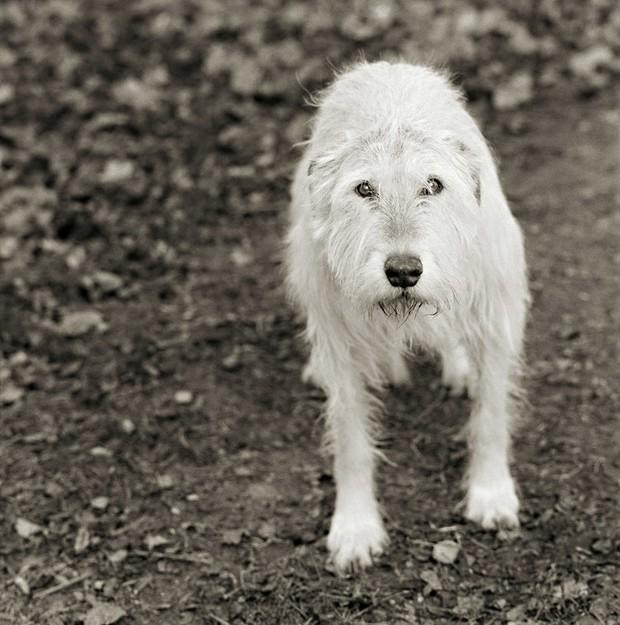 Chùm ảnh những con vật được cho phép sống đến già gây ám ảnh lạ kỳ: Khi các mảnh đời ngắn ngủi được ban tặng sự sống buồn tủi - Ảnh 11.