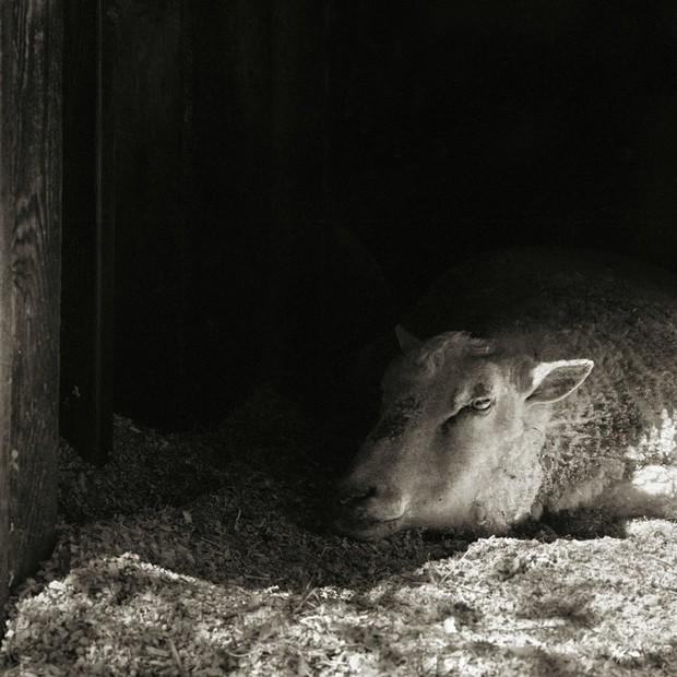 Chùm ảnh những con vật được cho phép sống đến già gây ám ảnh lạ kỳ: Khi các mảnh đời ngắn ngủi được ban tặng sự sống buồn tủi - Ảnh 14.