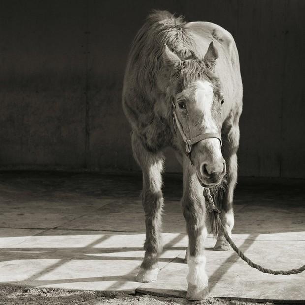 Chùm ảnh những con vật được cho phép sống đến già gây ám ảnh lạ kỳ: Khi các mảnh đời ngắn ngủi được ban tặng sự sống buồn tủi - Ảnh 9.