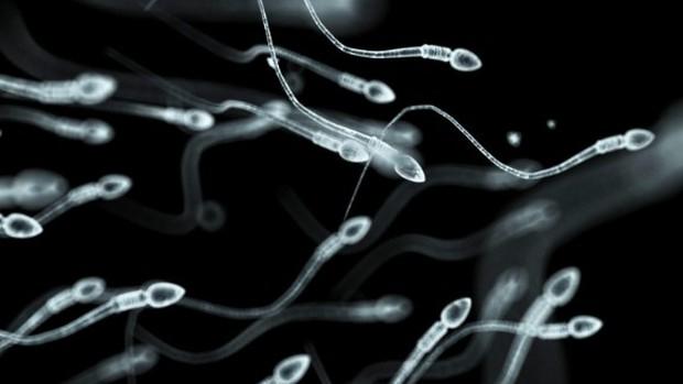 Thiên tài từ trứng nước: Từng có một nơi chỉ lấy tinh trùng của thiên tài giỏi nhất thế giới, và những gì xảy ra sau đó không giống như bạn tưởng tượng - Ảnh 3.