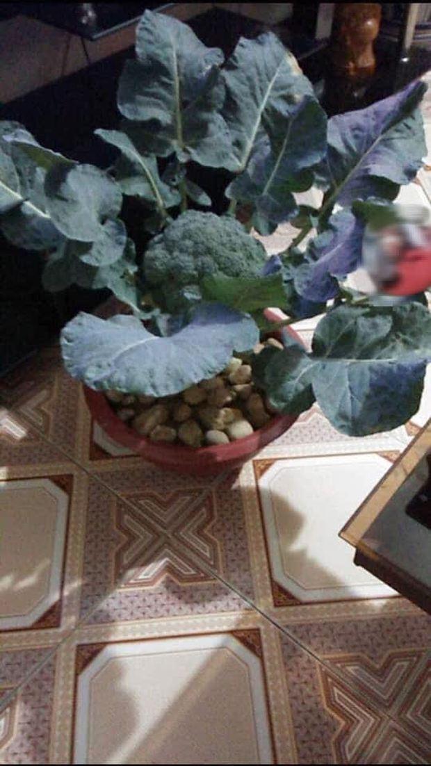 Không phải hoa đào, hoa mai, đây mới chính là những loại cây chưng ngày Tết đậm chất sinh viên Học viện Nông nghiệp - Ảnh 8.