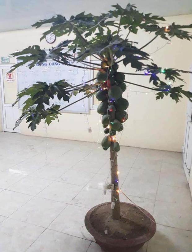 Không phải hoa đào, hoa mai, đây mới chính là những loại cây chưng ngày Tết đậm chất sinh viên Học viện Nông nghiệp - Ảnh 2.