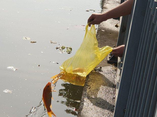 Người Sài Gòn chen chân thả cá chép trên kênh Nhiêu Lộc - Thị Nghè, tiễn ông Công ông Táo về trời ngày 23 tháng Chạp - Ảnh 8.