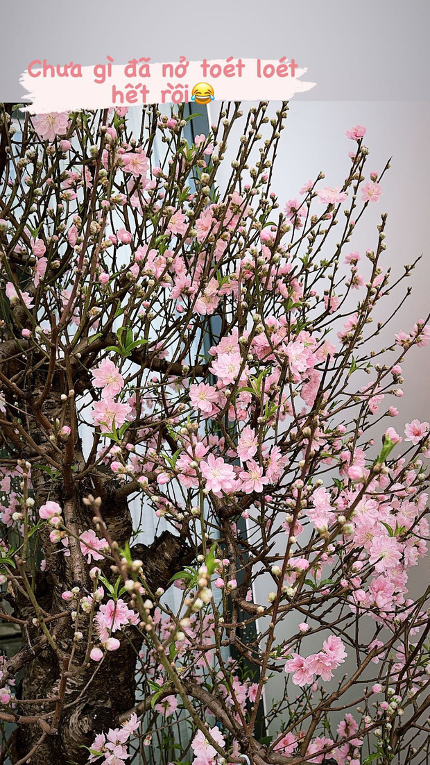 Sao Việt khoe cây hoa chơi Tết: Tóc Tiên, Bảo Anh mê đào, thanh liễu; Thanh Hằng lại là fan của tuyết mai  - Ảnh 10.