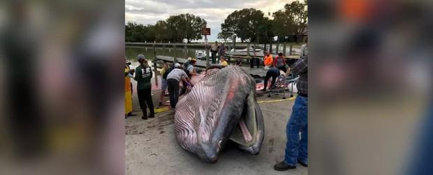 Xác cá voi khổng lồ dạt bờ, tưởng như bao lần khác nhưng khoa học lại phát hiện ra một sự thật bất ngờ - Ảnh 1.