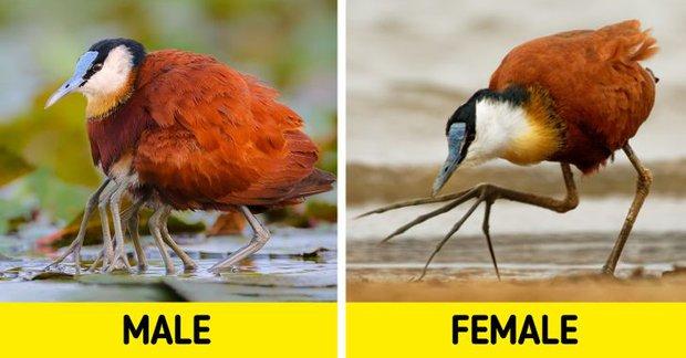 Những sự thật khó tin về các loài động vật cho chúng ta thấy mẹ thiên nhiên quả thực đã sáng tạo đến mức nào - Ảnh 9.