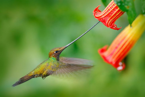 Những sự thật khó tin về các loài động vật cho chúng ta thấy mẹ thiên nhiên quả thực đã sáng tạo đến mức nào - Ảnh 4.