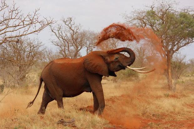 Những sự thật khó tin về các loài động vật cho chúng ta thấy mẹ thiên nhiên quả thực đã sáng tạo đến mức nào - Ảnh 5.