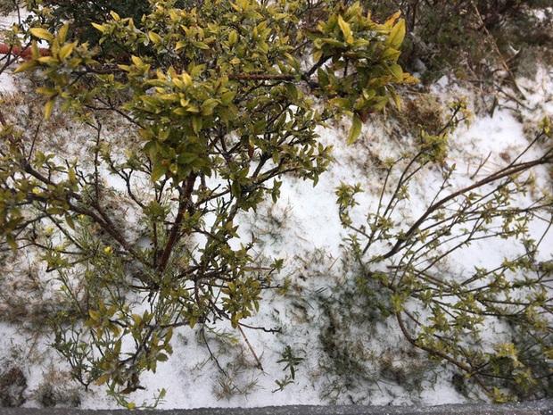 Tuyết bất ngờ rơi phủ trắng đỉnh Fansipan ngày cuối năm - Ảnh 8.