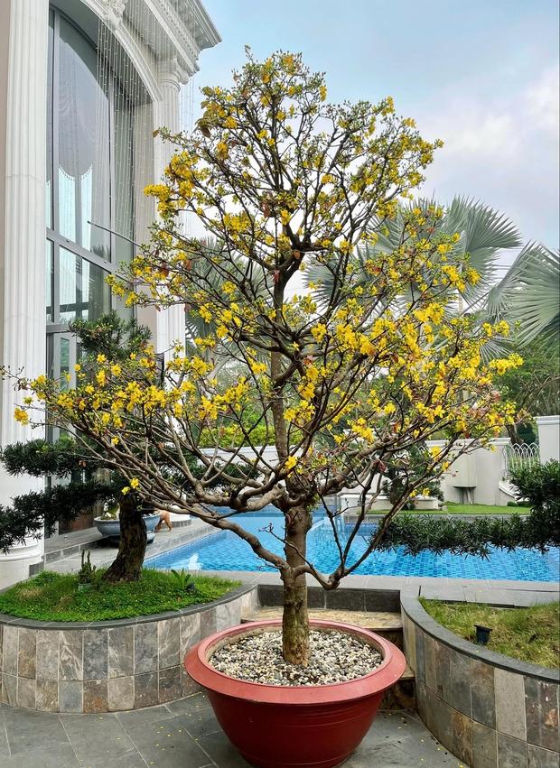 4 nhà hào môn Vbiz trang trí đón Tết: Bảo Thy - Hà Tăng sáng nhất khu nhà giàu, sân nhà Lan Khuê khủng như công viên - Ảnh 2.