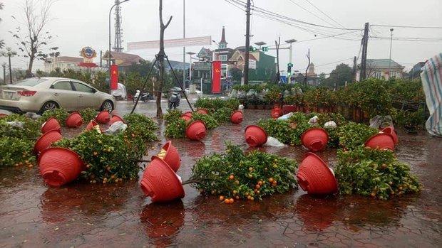 Ảnh, clip: Nhiều chợ hoa đổ gãy trong cơn mưa rét cuối năm, cây cảnh tan tác khiến nhiều người xót xa - Ảnh 2.