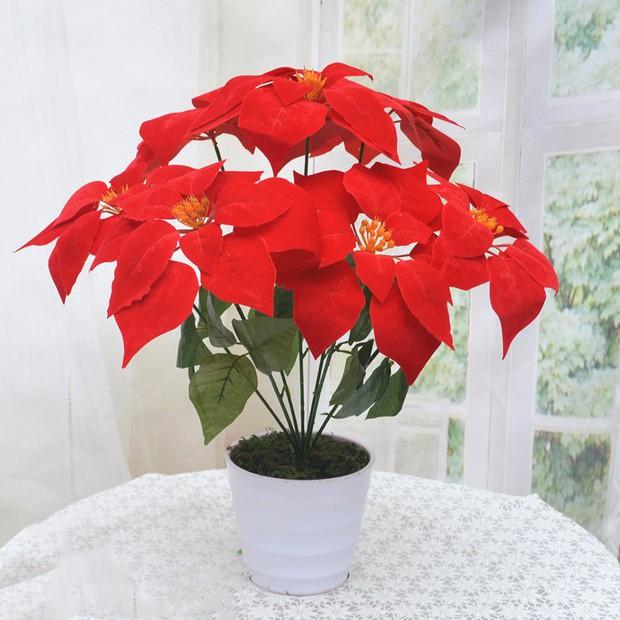 8 loại cây đẹp mà độc không nên trồng trong nhà kẻo rước bệnh và vận xui vào người - Ảnh 6.
