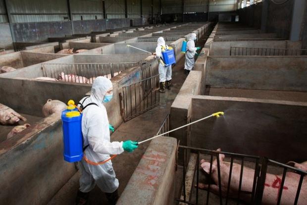Trung Quốc phát hiện ít nhất 4 biến thể virus gây tả lợn châu Phi - Ảnh 1.