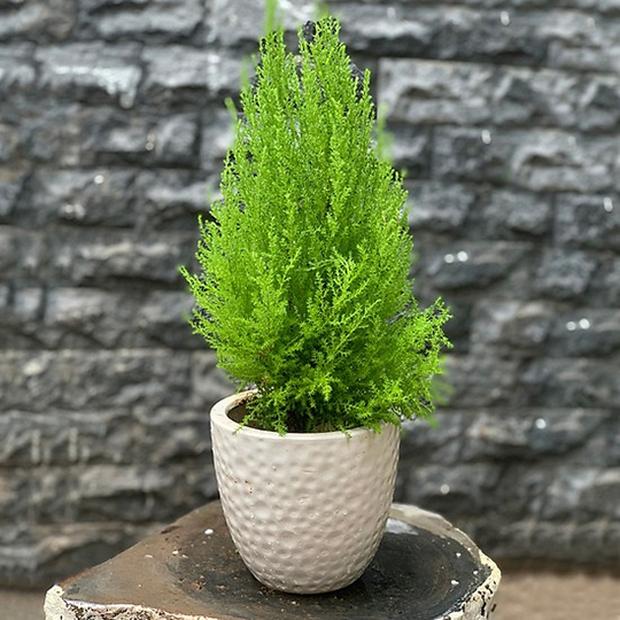8 loại cây đẹp mà độc không nên trồng trong nhà kẻo rước bệnh và vận xui vào người - Ảnh 8.