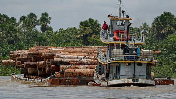 2/3 diện tích rừng mưa nhiệt đới bị phá hủy hoặc suy thoái trên toàn cầu - Ảnh 1.