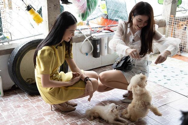 Diệp Bảo Ngọc theo chân người phụ nữ chăm gần 100 chú chó mèo tật nguyền bị bỏ rơi - Ảnh 7.