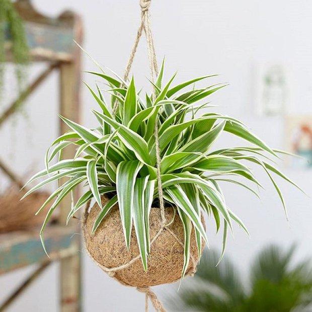 4 loại cây hợp với người mệnh Thuỷ, trồng trong nhà sẽ có thêm vượng khí - Ảnh 4.