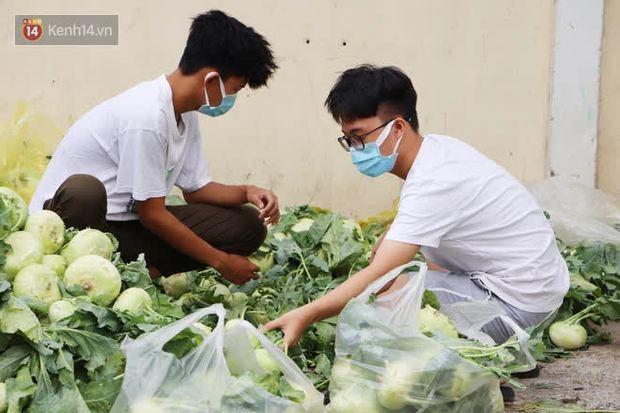 Rằm tháng Giêng, người Sài Gòn hồ hởi kéo nhau đi giải cứu bắp cải, su hào cho bà con Hải Dương - Ảnh 10.
