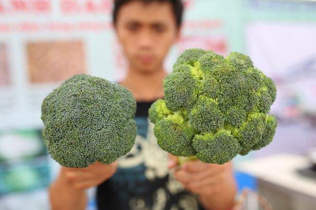 Mua bông cải xanh nhớ chú ý tới 3 đặc điểm để chọn được loại vừa ngon, vừa tươi - Ảnh 2.