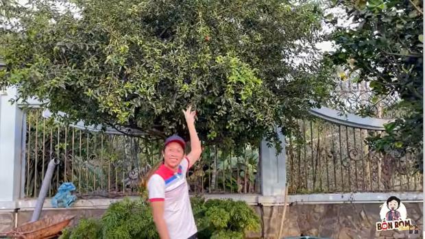NS Hoài Linh dạo quanh vườn biệt thự 100 tỷ, kể chuyện cái cây được trả giá 7 tỷ không bán và cái kết ngã ngửa - Ảnh 3.
