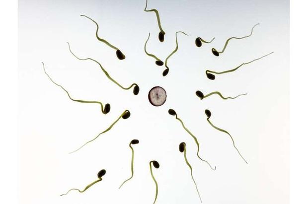 Thuốc tránh thai mới dành cho nam giới: Khiến cánh mày râu vô sinh tạm thời nhưng khi dừng thuốc vẫn có thể có con khỏe mạnh - Ảnh 1.
