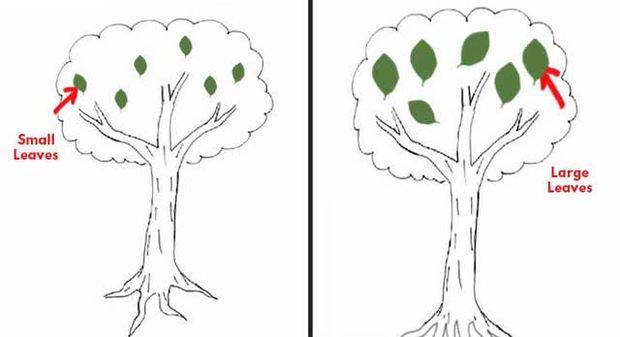 Đặt bút vẽ một chiếc cây, mỗi người cho ra một tác phẩm riêng: Bạn có biết tác phẩm của người hướng nội khác người hướng ngoại ở điểm nào không? - Ảnh 4.