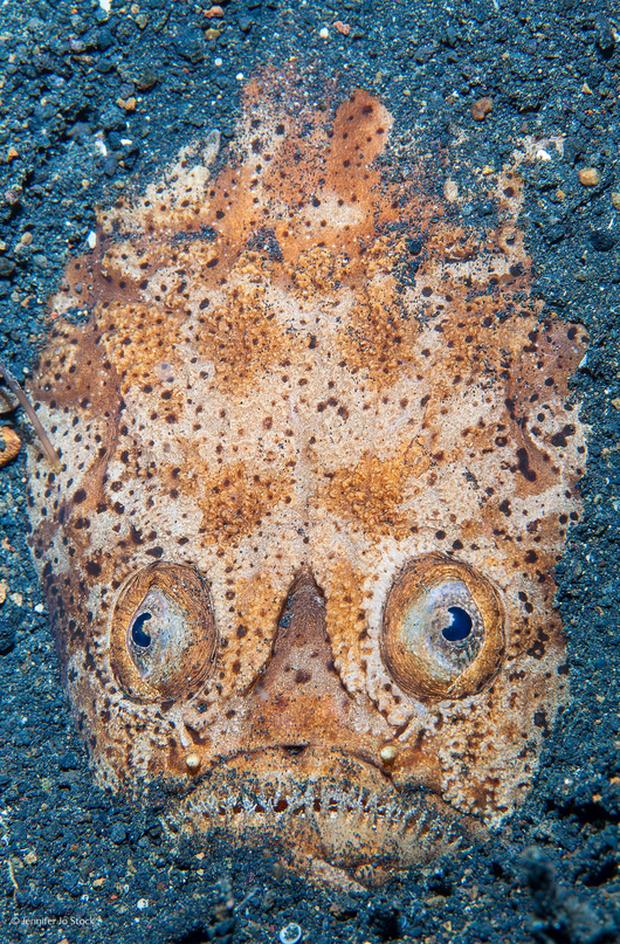 Thủy quái có gương mặt cười nhăn nhở dạt vào bờ biển, người dân đăng đàn tìm info vì bộ nhá xấu đến phát hờn - Ảnh 3.