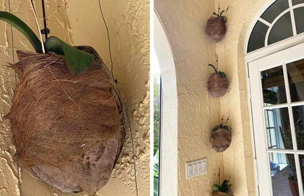 Những cách cấp cứu khi cây trong nhà, văn phòng bị héo úa, sắp chết - Ảnh 4.