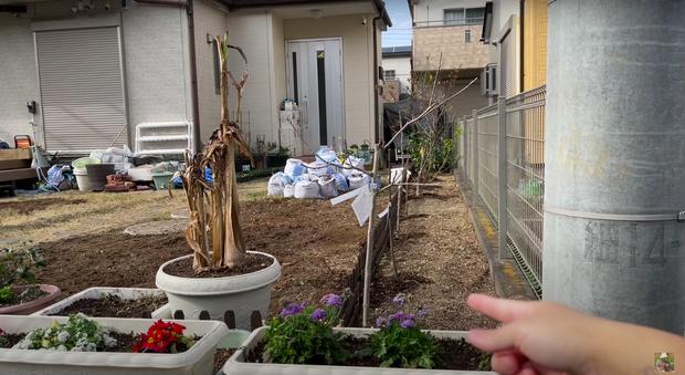 Quỳnh Trần JP bị hàng xóm gây gổ vì chuyện trồng cây bên hàng rào, phản ứng của ông xã chị Quỳnh mới khiến dân tình bất ngờ - Ảnh 1.