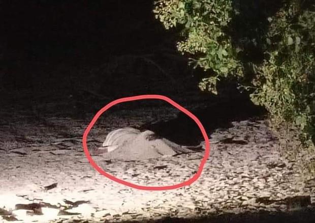 Thi thể người đàn ông nằm chết trong vườn cây, cạnh xe máy - Ảnh 2.
