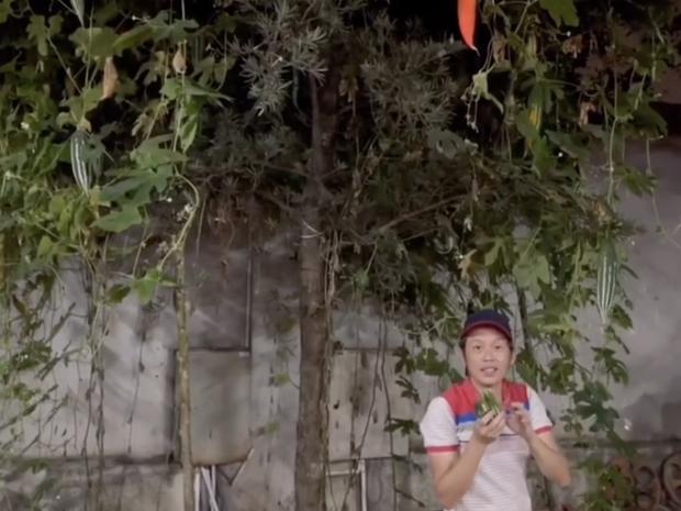 NS Hoài Linh khoe trong vườn trăm tỷ nhà mình có giống cây lạ, tên gọi nghe kỳ quặc nhưng ăn vào ngon - bổ - mát - Ảnh 3.