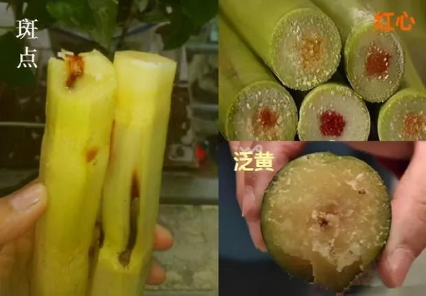 Ăn mía lúc 5 tuổi, cô gái Trung Quốc 30 năm sống trong tình trạng dị dạng xương khớp: Đây là loại mía bạn tuyệt đối đừng nên mua - Ảnh 2.