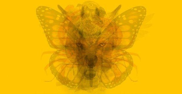 Bức tranh ẩn giấu 9 loài động vật, thứ bạn nhìn thấy đầu tiên sẽ tiết lộ tính cách cũng như xu hướng làm việc - Ảnh 1.