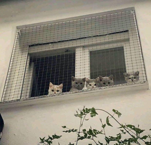 Theo luật, có được phép nuôi chó mèo trong chung cư? - Ảnh 1.
