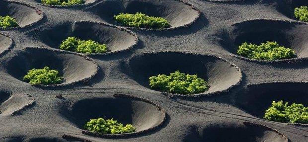Người nước ngoài tận dụng miệng núi lửa để… trồng nho, dân mạng xem ảnh xong đều liên tưởng đến thứ quen thuộc này  - Ảnh 5.