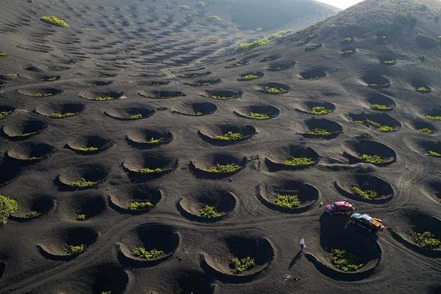 Người nước ngoài tận dụng miệng núi lửa để… trồng nho, dân mạng xem ảnh xong đều liên tưởng đến thứ quen thuộc này  - Ảnh 1.