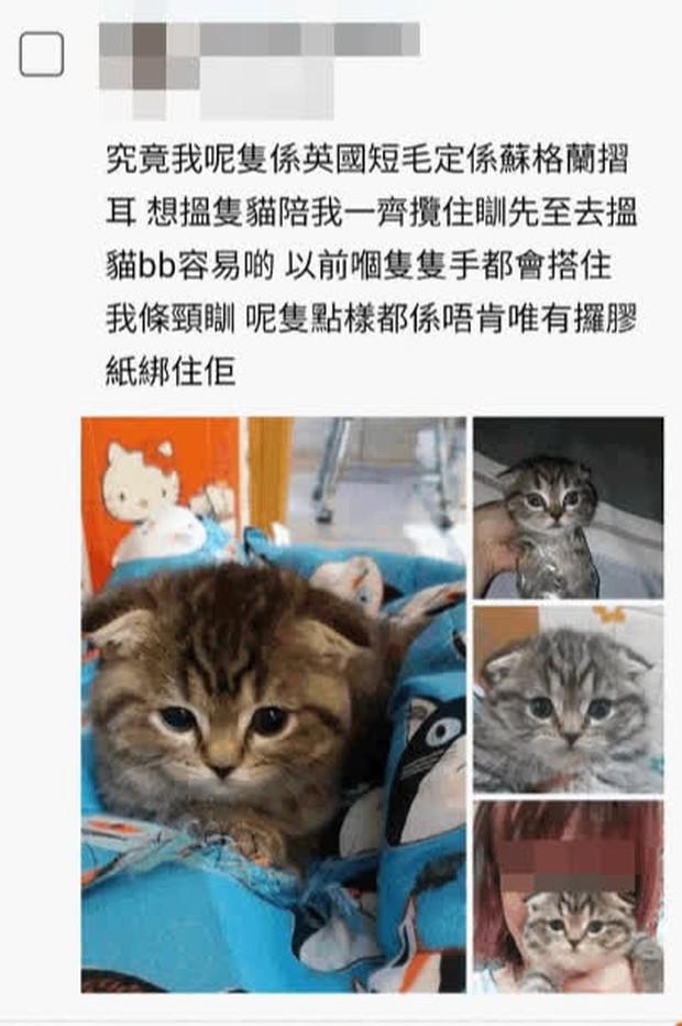 Đăng hình mèo cưng lên mạng, người phụ nữ bị cảnh sát ập đến nhà bắt ngay lập tức vì một chi tiết nhỏ mà nhìn kỹ mới thấy rùng mình - Ảnh 1.