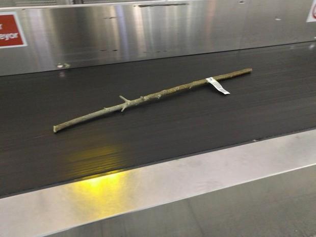 Xỉu up xỉu down với những hình ảnh siêu quái lạ được chụp lại ở sân bay, trường hợp cuối mới là gây sốc nhất - Ảnh 12.