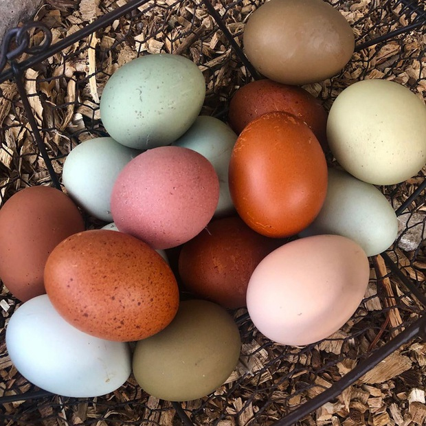 Trong thế giới trứng gà, nên mua loại nào tốt nhất: Không phải đắt tiền, đây mới là tiêu chí số 1 - Ảnh 1.