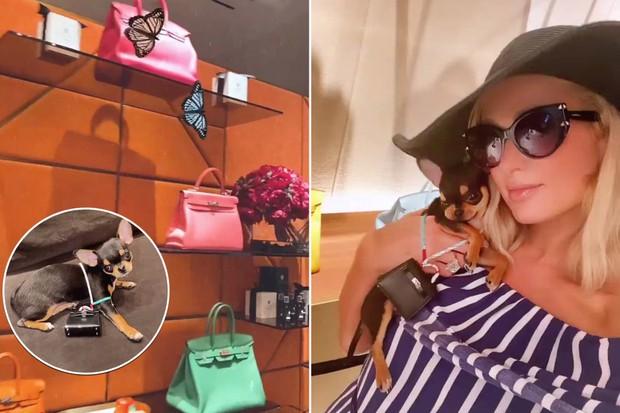 Paris Hilton vui tay sắm túi Hermès bé xíu cho cún cưng, soi giá xong mà giật mình! - Ảnh 2.