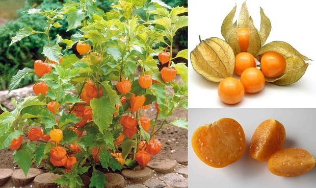 Một loại quả mọc dại đầy đồng quê Việt Nam bỗng gây sốt, giá bán tới 400k/kg - Ảnh 1.