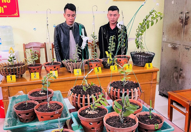 Đi ôtô tới Thanh Hóa trộm hoa lan đột biến giá trị 1,8 tỉ đồng - Ảnh 1.