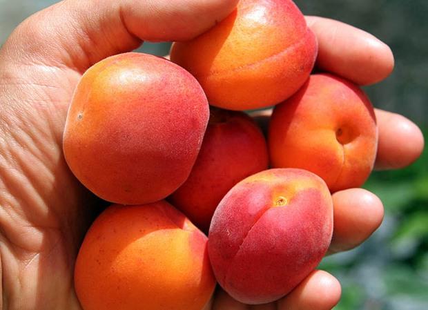 5 loại quả được ví như thuốc làm trắng da tự nhiên lại giúp loại bỏ dầu nhờn dư thừa, ở Việt Nam vừa có nhiều vừa rẻ - Ảnh 2.