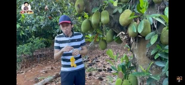 Sau nhà thờ tổ trăm tỷ, NS Hoài Linh hé lộ cơ ngơi là khu vườn trái cây đủ loại của ngon vật lạ siêu to ở Đồng Nai - Ảnh 3.