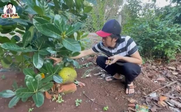 Sau nhà thờ tổ trăm tỷ, NS Hoài Linh hé lộ cơ ngơi là khu vườn trái cây đủ loại của ngon vật lạ siêu to ở Đồng Nai - Ảnh 4.