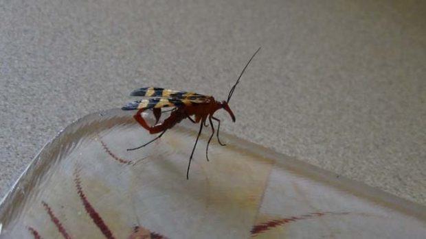 Đang dọn nhà thì phát hiện bọ cạp bay kinh dị, gia chủ thiếu điều bỏ của chạy lấy người - Ảnh 5.